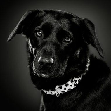 Wadham's Dog